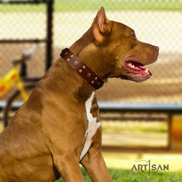 Pitbull handmade natural genuine leather collar with decorations for your four-legged friend
