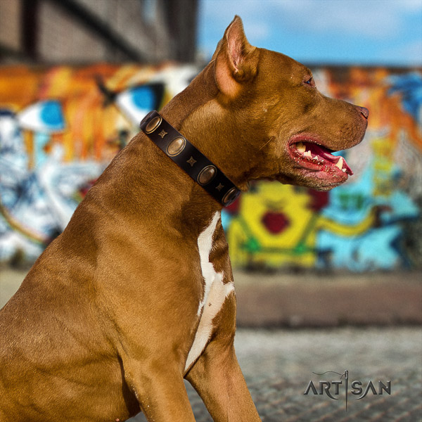 Pitbull inimitable adorned leather dog collar for everyday use