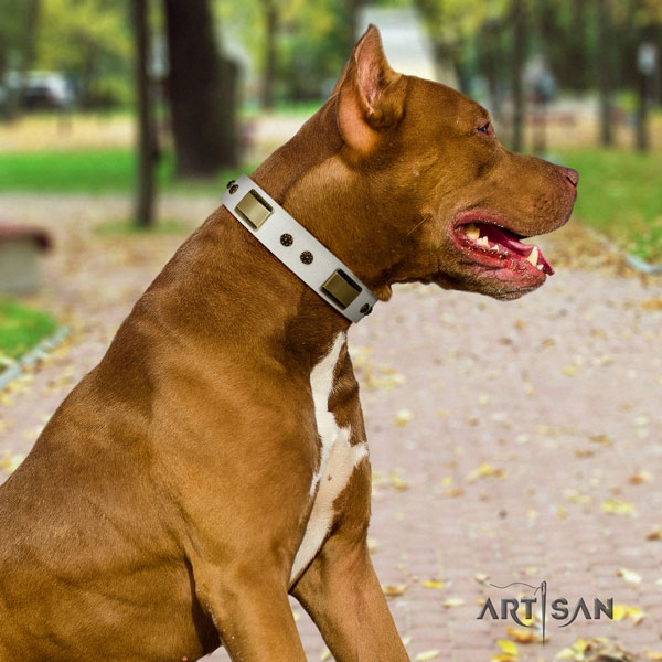 Pitbull easy wearing genuine leather dog collar with stylish design studs
