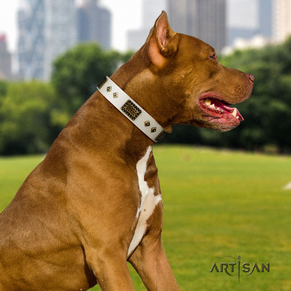 Pitbull easy to adjust genuine leather dog collar with trendy embellishments