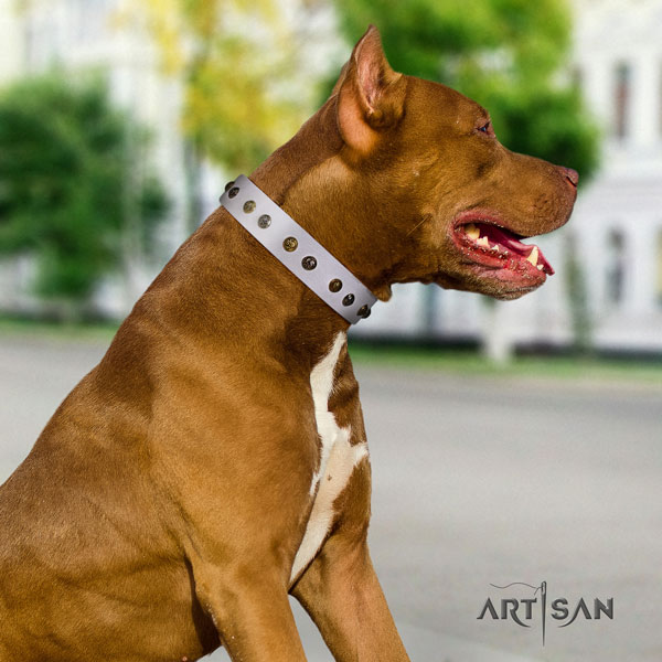 Pitbull awesome leather collar with embellishments for your doggie