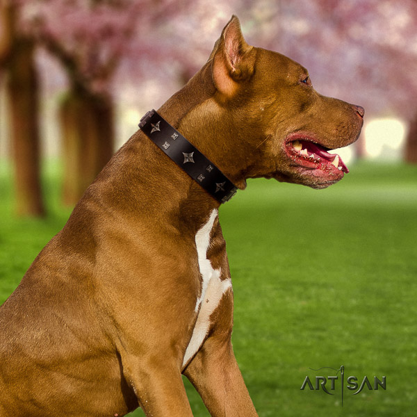 Pitbull amazing decorated genuine leather dog collar for comfy wearing