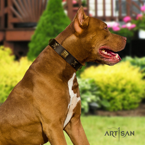 Pitbull amazing studded natural leather dog collar for handy use