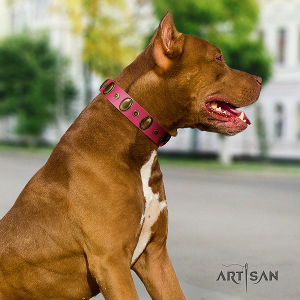 Pitbull exceptional adorned natural leather dog collar for everyday use