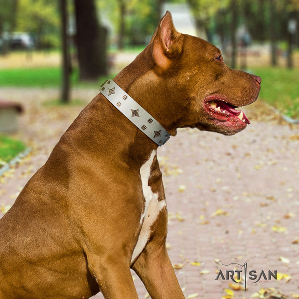 Pitbull designer adorned leather dog collar for stylish walking