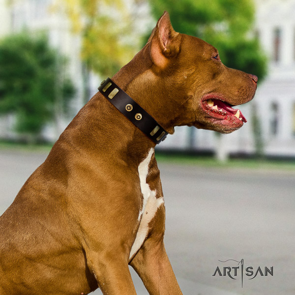 Pitbull significant decorated full grain leather dog collar for stylish walking