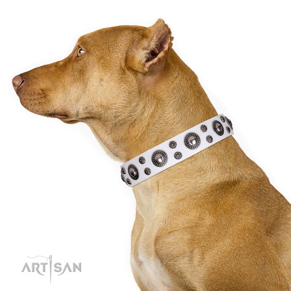 Pitbull extraordinary genuine leather dog collar for daily walking