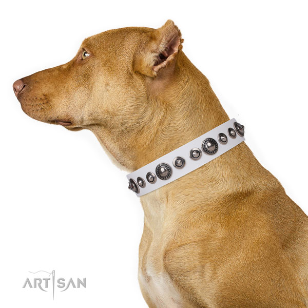 Pitbull adorned genuine leather dog collar for comfortable wearing