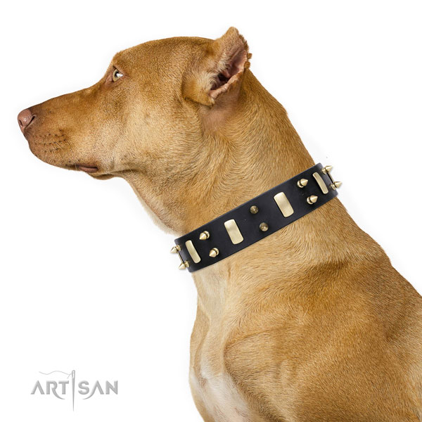 Pitbull decorated full grain leather dog collar for daily use