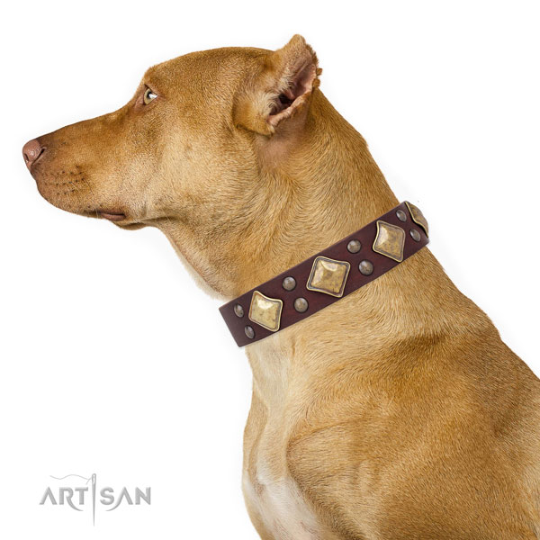 Pitbull easy adjustable full grain natural leather dog collar for fancy walking