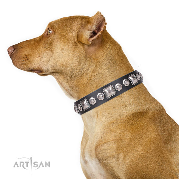 Pitbull stylish full grain natural leather dog collar for everyday use