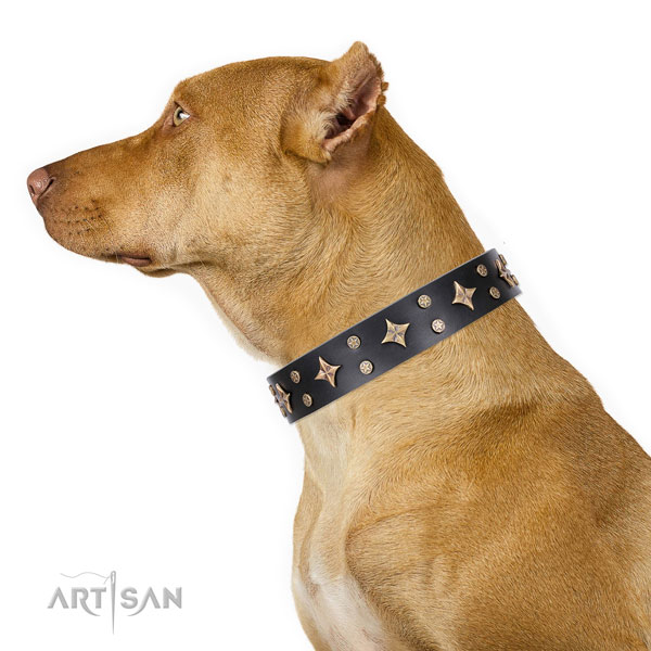 Pitbull impressive full grain leather dog collar for everyday walking