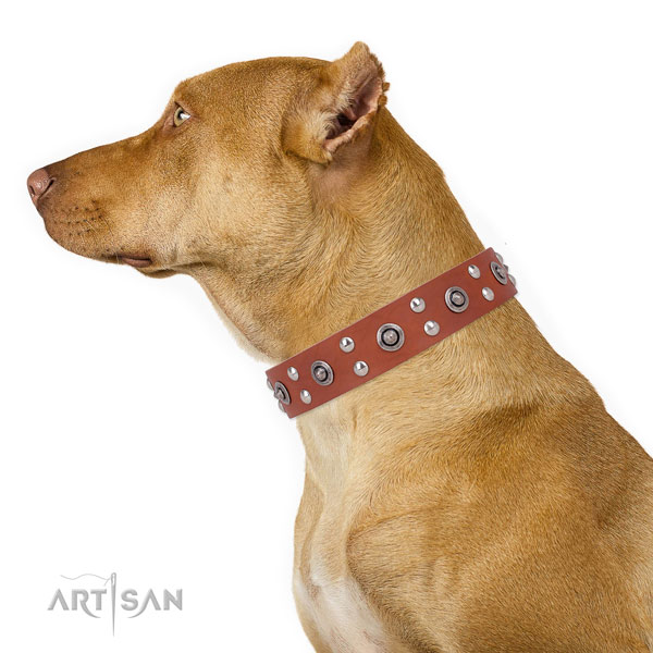 Pitbull adorned natural genuine leather dog collar for fancy walking