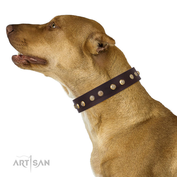 Pitbull easy adjustable full grain genuine leather dog collar for comfortable wearing