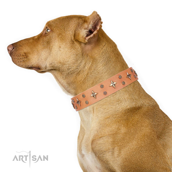 Pitbull best quality full grain leather dog collar for walking