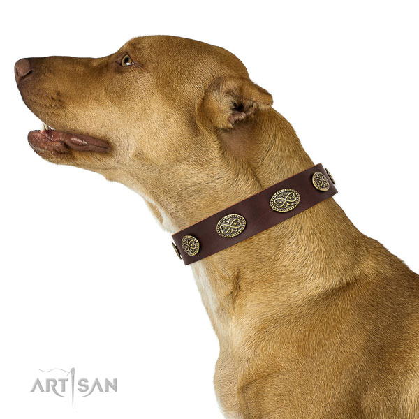 Pitbull remarkable full grain genuine leather dog collar for fancy walking