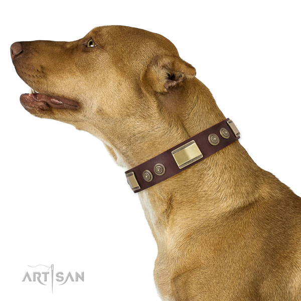 Pitbull handmade leather dog collar for daily use