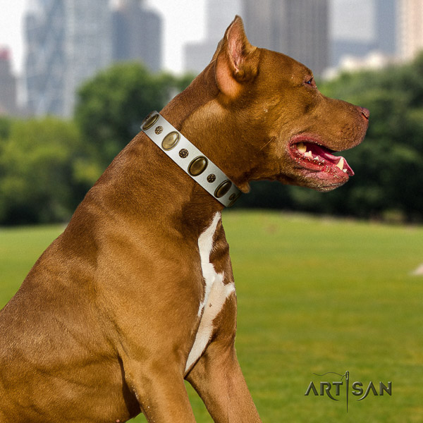 Pitbull impressive studded natural leather dog collar for everyday walking