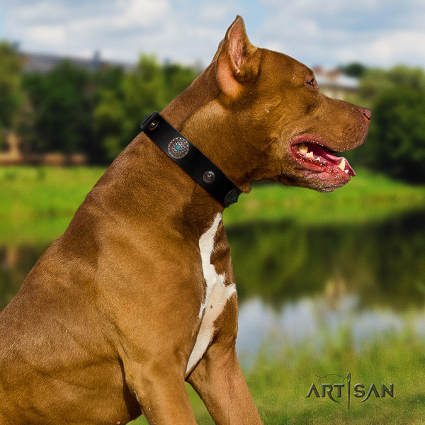 Pitbull inimitable studded full grain genuine leather dog collar for everyday walking