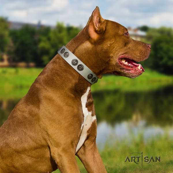 Pitbull stunning decorated genuine leather dog collar for handy use