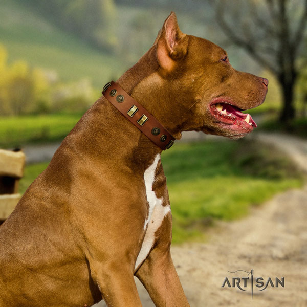 Pitbull best quality natural genuine leather dog collar with incredible studs
