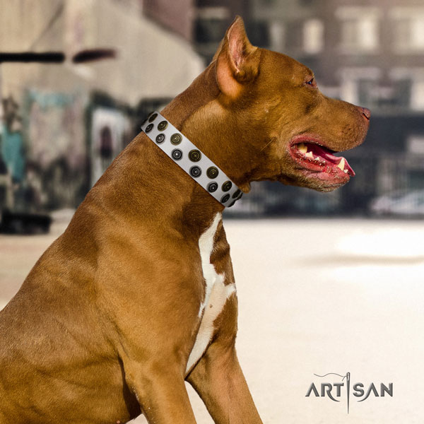 Pitbull trendy genuine leather collar with decorations for your canine
