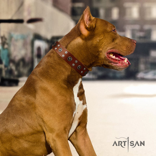 Pitbull remarkable full grain natural leather collar with adornments for your doggie