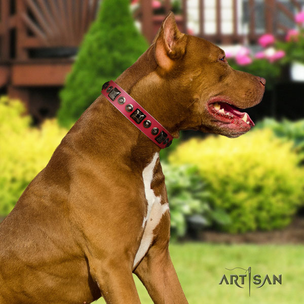 Pitbull top notch full grain natural leather collar with adornments for your canine