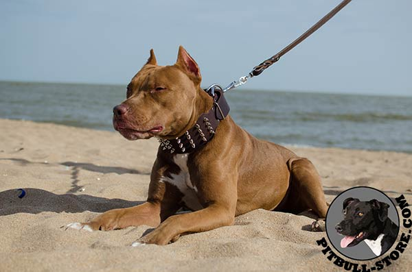 Durable Pitbull collar for stylish dogs