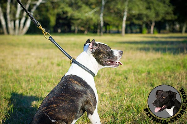 Rounded leather choke Pitbull collar for silent training