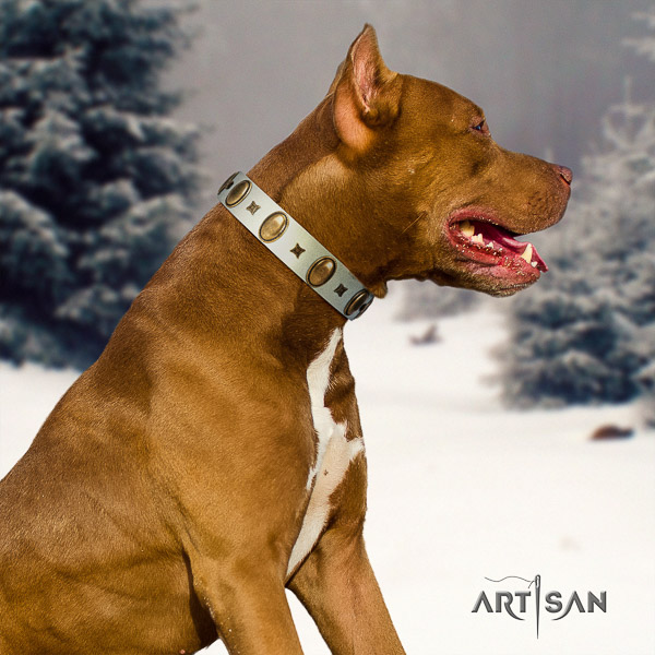 Pitbull designer adorned full grain natural leather dog collar for walking