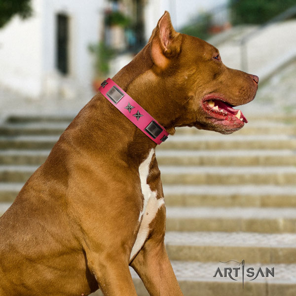 Pitbull convenient full grain natural leather dog collar with stunning embellishments