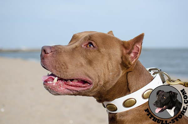 Dog collar for Pitbull of durable leather