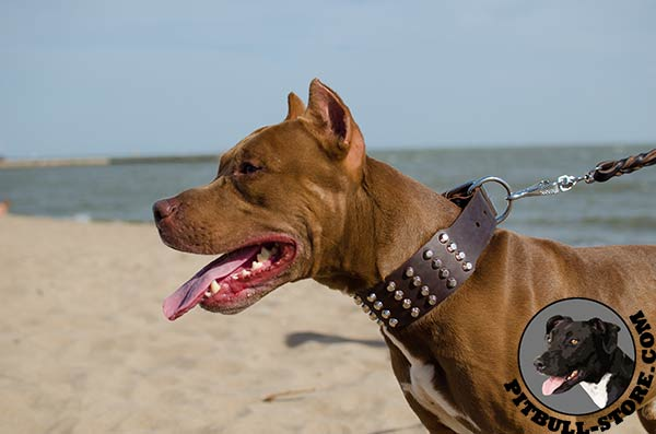 Leather Pitbull dog collar with adorable adornment