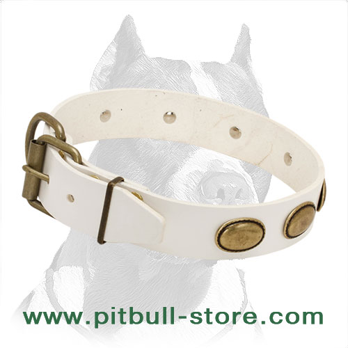 Leather collar for Pitbulls, strong and soft leather with rust-resistant fixtures