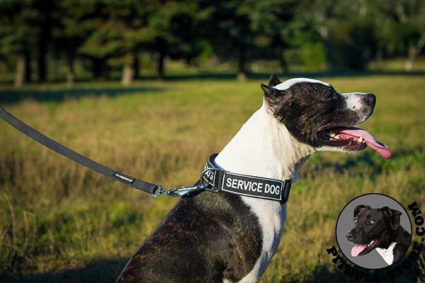 Nylon collar for Pitbull with quick release buckle