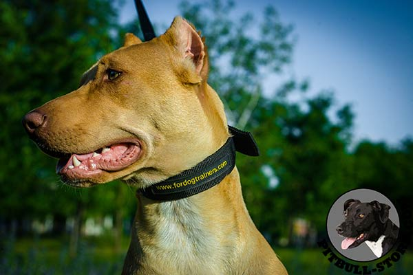 Lightweight nylon dog collar for Pitbull all-weather walks