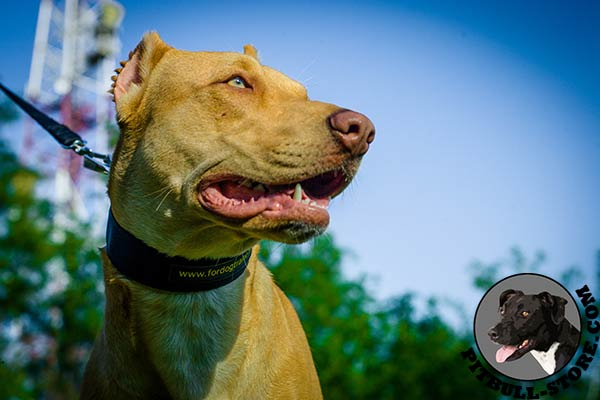 Pitbull collar made of practical and durable nylon
