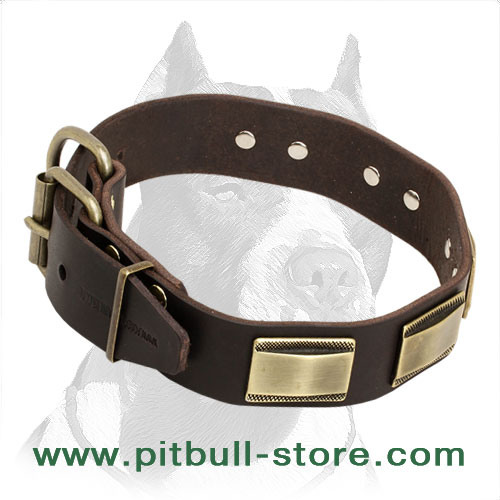 Dog collar for Pitbull for stylish walks and successful training