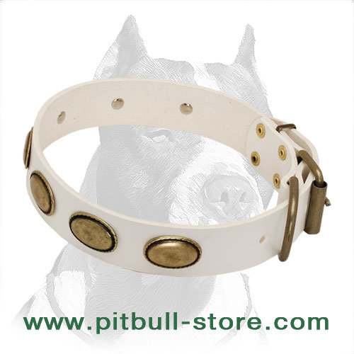Leather dog collar with brass decor and fitting for goldish look