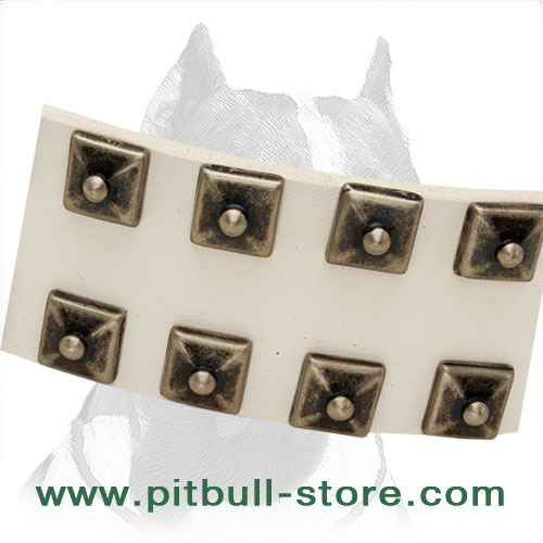 Pitbull collar of genuine leather with hand-set fittings for long-lasting service