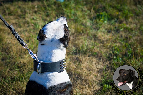 Wide Pitbull collar with strong hardware