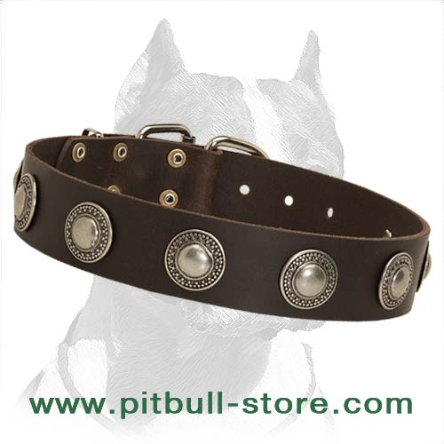 Stylish Dog Collar for Pitbull