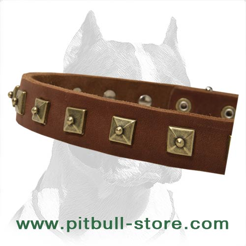 Collar with Square Brass Studs