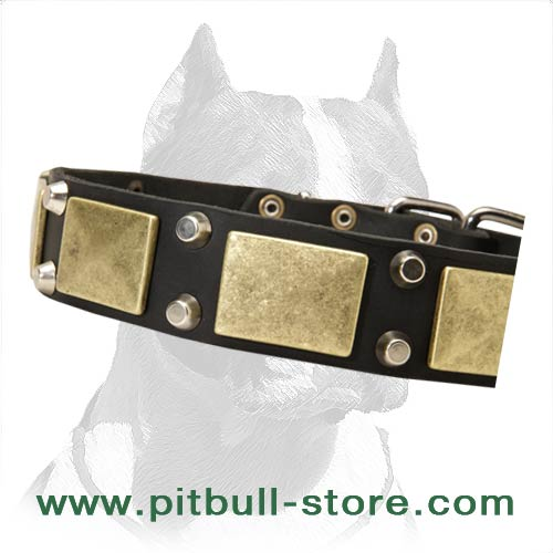 Designer Leather Pitbull Collar