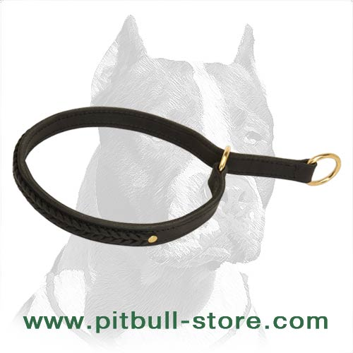 Beautifull Pitbull Dog Collar