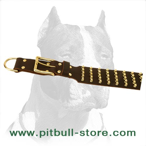Dog Collar with brass belt buckle