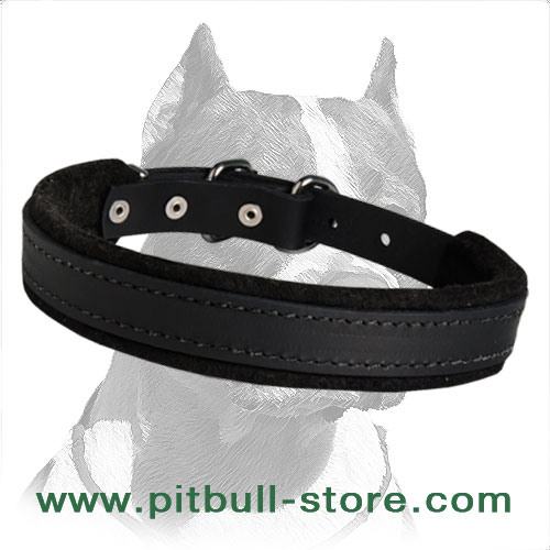 Hardwearing Leather Dog Collar with nickel buckle