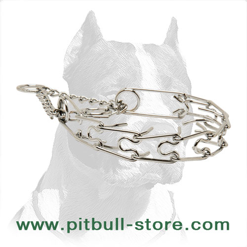 Dog prong collar of chrome plated steel for Pit Bulls
