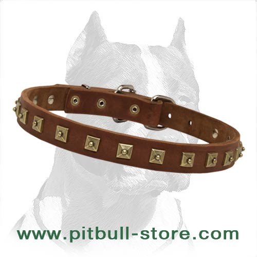 Beautiful Studded Collar